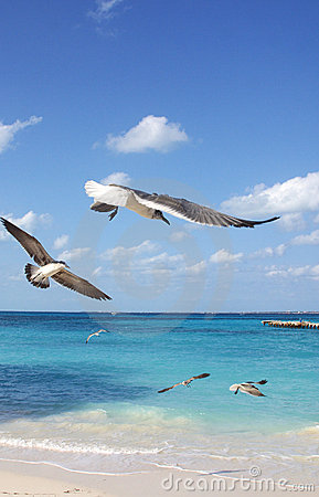 Cancun Stock Image - Image: 901601