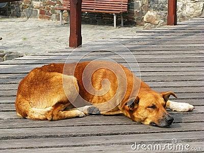 Cane 1 della via