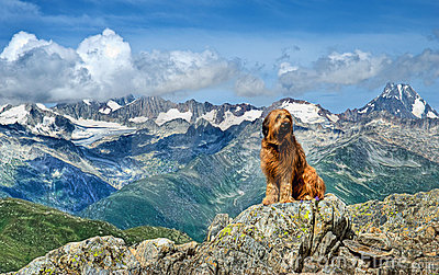 Cane alpino