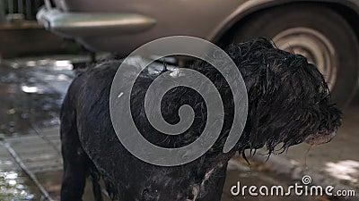 Cane bagnato dopo un bagno in giardino d'estate video d archivio