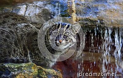 Cane cat