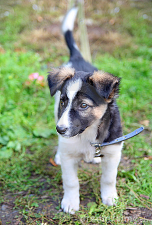 Cane che osserva stare del cucciolo