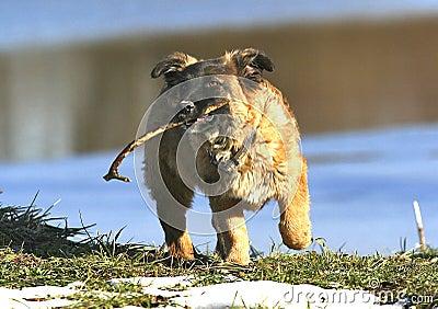 Cane con il bastone