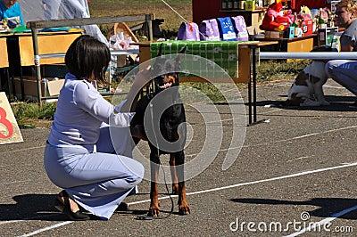 Cane di manifestazione di estate Immagine Editoriale