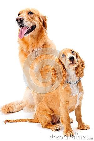Cane e cucciolo