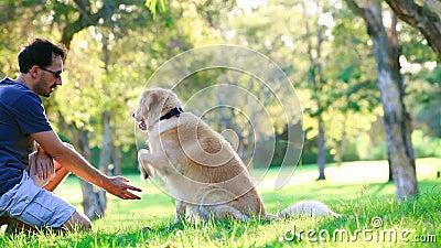 Cane ed il suo proprietario nel parco stock footage