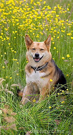 Cane felice nel campo dei fiori