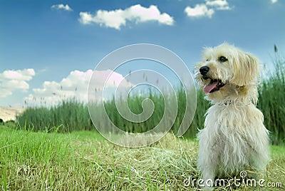 Cane nell erba