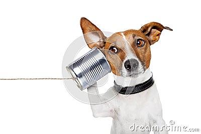 Cane sul telefono