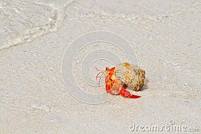 Cangrejo de ermitaño que recorre hacia el mar