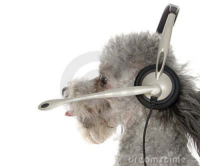 Canine Customer Service
