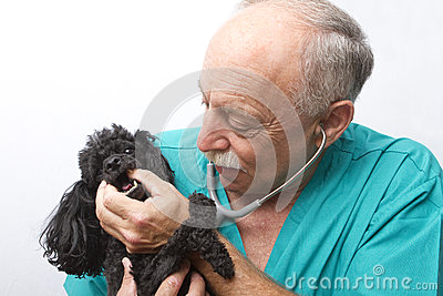 Canine Doctor and Patient