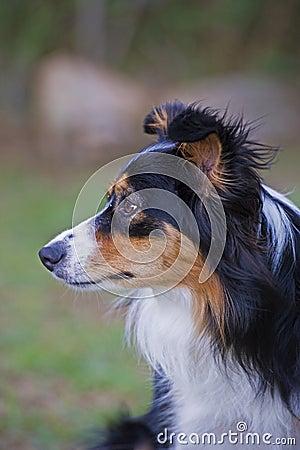 Canine Intelligence