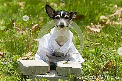 Canine Karate