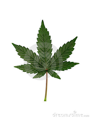 Free Cannabis Leaf Stock Photos - 2574453