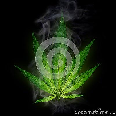 Free Cannabis Leaf, Marijuana Plant Royalty Free Stock Image - 42526746