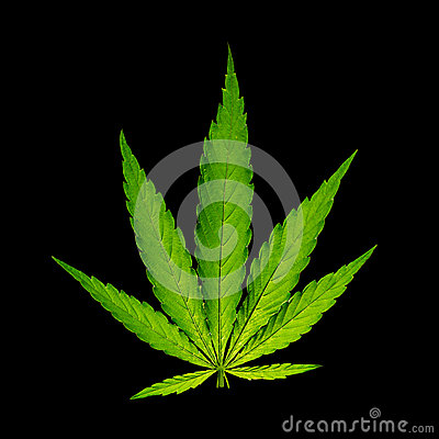 Free Cannabis Leaf, Marijuana Plant Royalty Free Stock Photos - 42546818