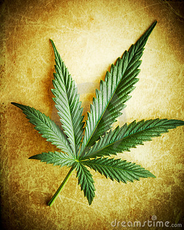 Free Cannabis Leaf On Grunge Background. Royalty Free Stock Photo - 15356075