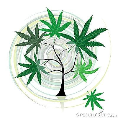 Cannabis tree