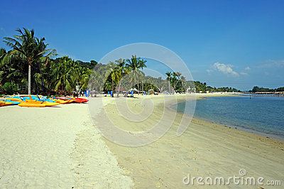 Canoes and palm trees on sunny beach