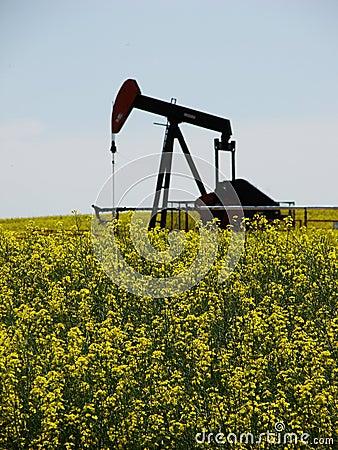 Canola Bio Fuel