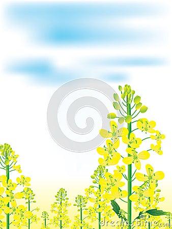 Canola Flowers Landscape_eps