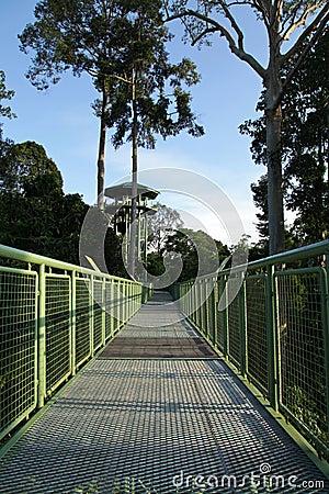Canopy Walk!