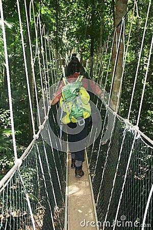 Canopy walk Editorial Photo