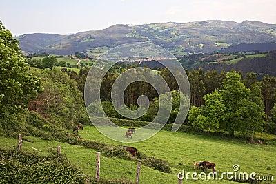 Cantabria valley
