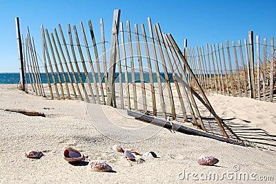 Cape Cod Beach Scene