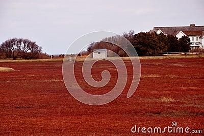 Cape Cod cranberry bog
