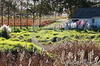 Cape Town Rural