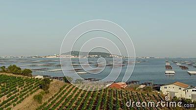 Captura aérea de lago con granja de ostras y viñedo metrajes