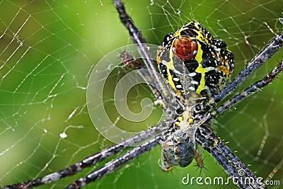 capture d 39 araign e la proie photographie stock image 34396122. Black Bedroom Furniture Sets. Home Design Ideas