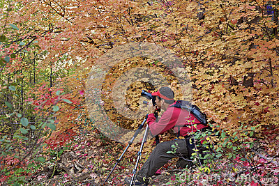 Capturing Beautiful Fall Foliage