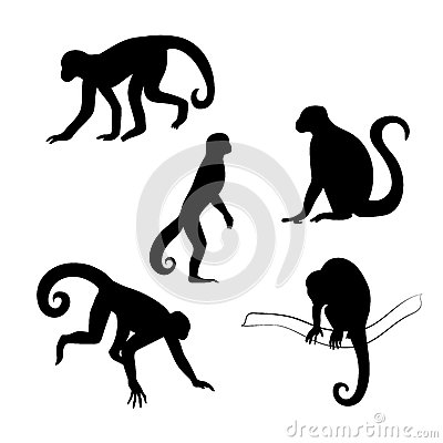 Free Capuchin Monkey Vector Silhouettes Stock Photography - 56781742
