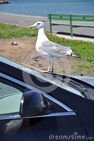 Free Car And The Bird Stock Photo - 29063580