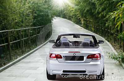 Car in the bamboo grove .
