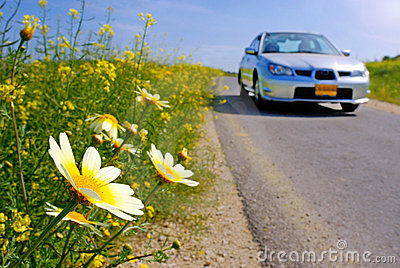 Car and daisies on the road