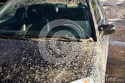 car  in a dirt