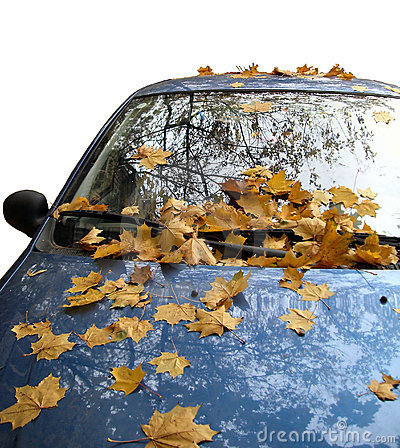 A car with leaves