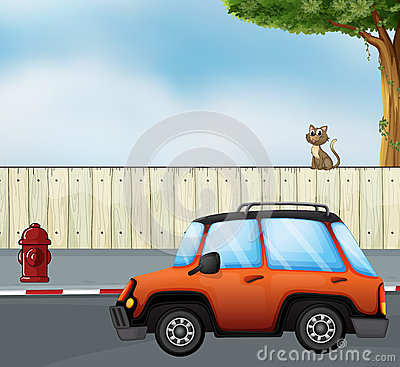 A car at the road and a cat above the fence