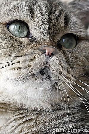 Cara encantadora del gato.