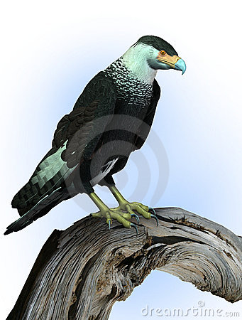 CaraCara Vulture Perched on Wood - includes clipping path