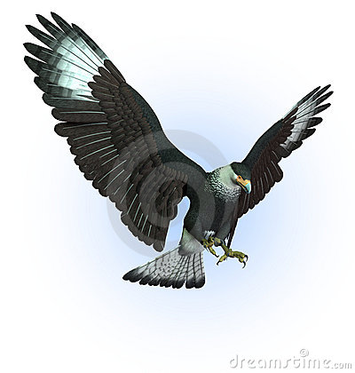 CaraCara Vulture Swooping Down - includes clipping path
