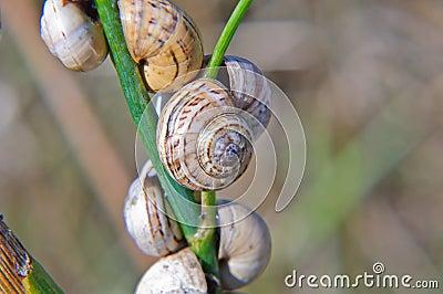 Caracol en un tallo de la hierba