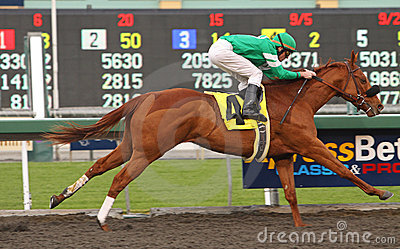 Caracortado Wins The Cal Breeders  Champion Editorial Stock Photo