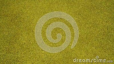 Caratteristica di vetro dorata dell'acqua - primo piano medio stock footage