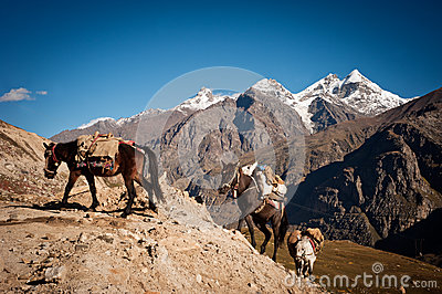 Caravan van paarden