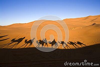 Caravana no deserto de Sahara
